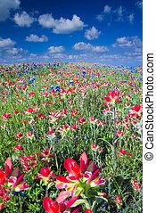 champ, wildflowers, indien, bluebonnets, pinceau