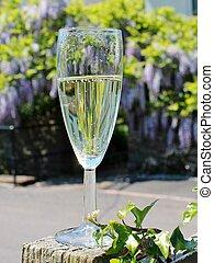 Champagne glass celebrate wisteria