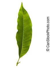 Champaka leaf tropical isolated on white