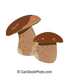 champignon, boletus