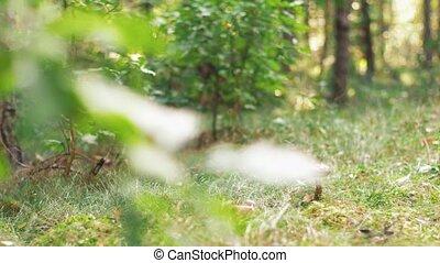 champignon brun, casquette, boletus, forêt automne, ou