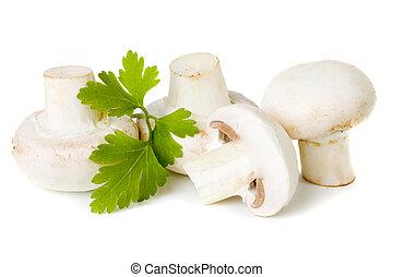 Champignon (button) mushroom