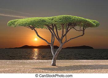 champignon, formé, arbre, exotique, mer, sunset.