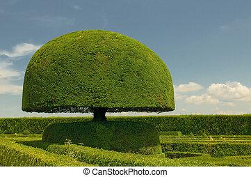 champignon, formé, arbre