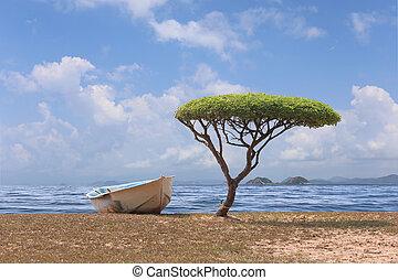 champignon, formé, arbre, une, day., clair, temps, mer, bateau