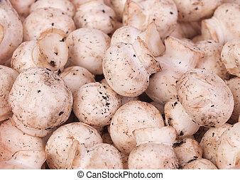 champignon, hongo