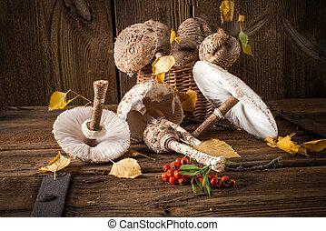 champignon parasol, (macrolepiota, procera)