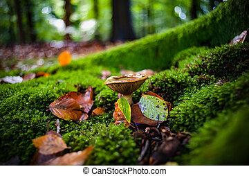 champignons, automne, scène, forêt