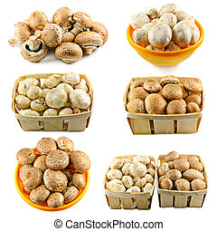 Champignons - Collage from six photos with white and brown...