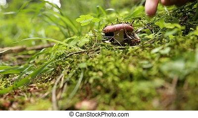 champignons, cueillette, mâle, forêt, mains
