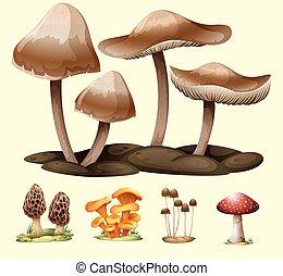 champignons, différent, espèce