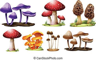 champignons, différent, types