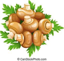 champignons, ensemble, nourriture, légumes, persil, champignons, vert