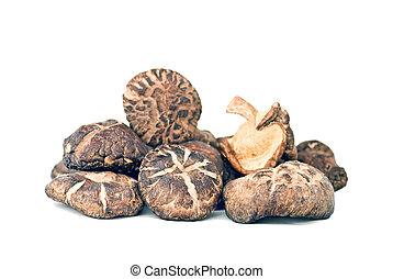 champignons, shiitake