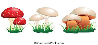 champignons, toxique