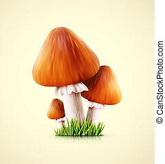 champignons, trois