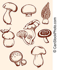 champignons, vendange, ensemble, forêt