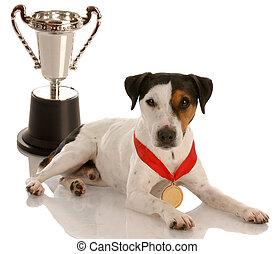 champion dog - jack russel terrier wearing gold medal...
