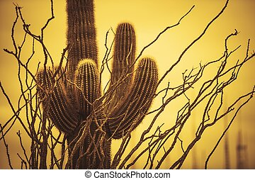 Champion Saguaro Arizona