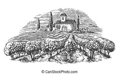 champs, dessiné, hills., vendange, villa, illustration, vignoble, rural, vecteur, noir, affiche, étiquette, blanc, paysage