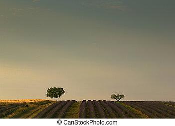 champs, espace, lot, image, lavande, vide, sommet