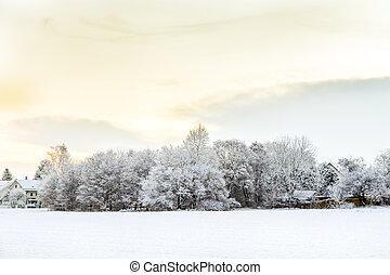 champs, neige, munich, horizon, couvert, règlement