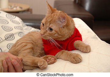 chandail, chaton rouge
