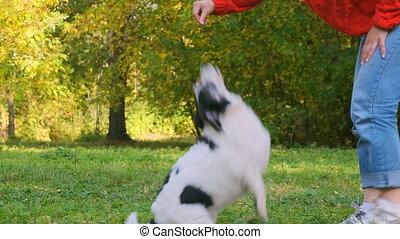 chandail, rouges, dogs., elle, jouer, femme, jeune