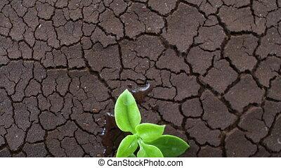 change., ground., fait, affecté, sol, concept., global, arbre, climat, eau, sécheresse, séché, fissure, croissant, sécheresse, toqué, chauffage, pénurie