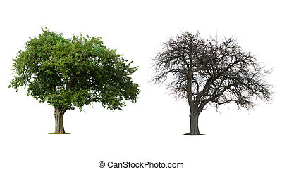 Change - Isolated Tree in Winter and Summer