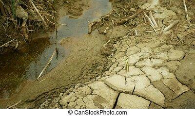 changement climat, mort, sécheresse, toqué, fissures, haut, ...