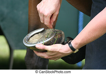 Changing Shoes - Some hands changing a horses shoe