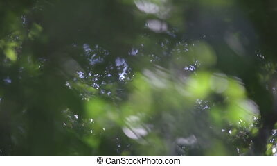 changing the focus of the lens in a rainforest to reveal...