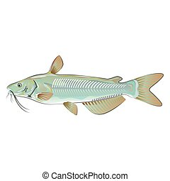 Channel Catfish Food Market