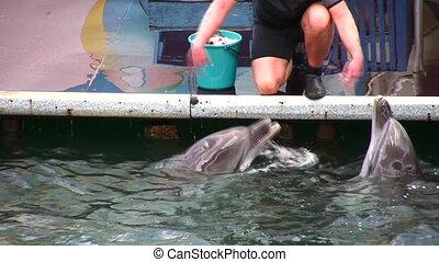 chant, dauphins