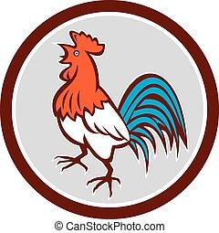 chant, haut, coq, regarder, retro, poulet, cercle