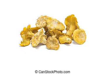 Chanterelle isolated on white, edible wild mushroom, Cantharellus cibarius
