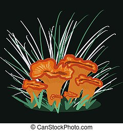 Chanterelle Mushroom illustration