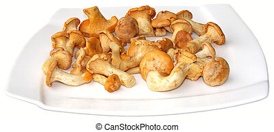Chanterelles - A lot of young chanterelles on the plate, ...