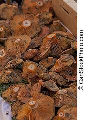 Chanterelles - Fresh chanterelles in a market exposed for ...