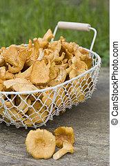 Chanterelles in a basket on a garden bench