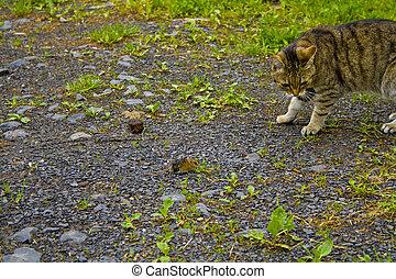 chaque, autre., chat, souris, regarder