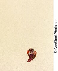 Character comma made of seashells on a coral sandy beach