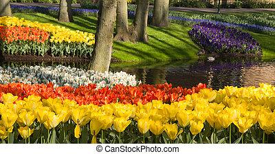 charca, con, colorido, springflowers