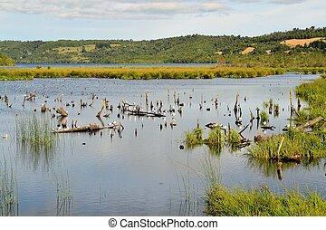 charca, en, pantanal, en, el, isla, de, chiloe, patagonia, chile