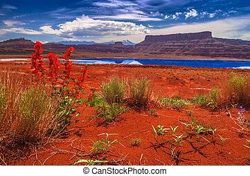 charcas, utah, -, moab, evaporación, salvaje, potasa, flores...