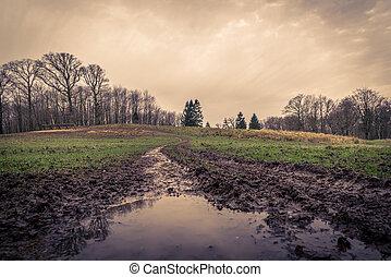 charco, fangoso, camino