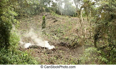 Charcoal burning in the rainforest, Ecuador. clearing for...