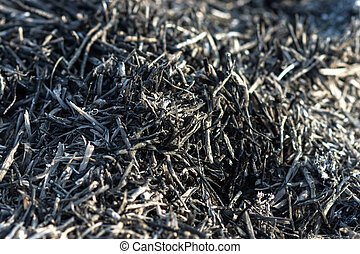 Charcoal from grass