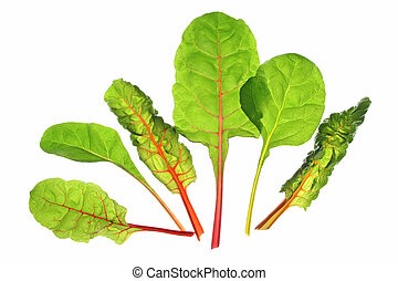 Chard (Beta vulgaris) - differently colored chard leaves...